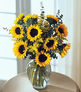 Endless Sunflower