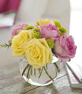Pink Lemonade Roses