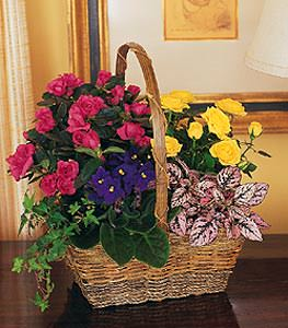 Blooming Garden Basket Flower Petalcom Send Flowers Online