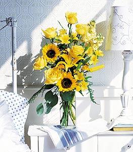 Blazing Sunshine