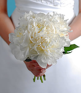 Clean and elegant this bouquet of pure white peonies evokes a sense of intimacy with its garden like appearance.