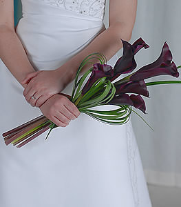 Displaying dark and distinctive coloration, this bundle of deep burgundy miniature calla lilies displays contrast and unmistakable beauty.