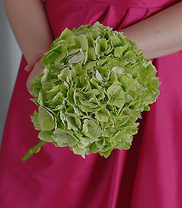 Although rather unconventional in appearance, the unique green hydrangea exudes a modern elegance.