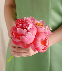 This lovely cluster of delicate coral pink peonies embodies natural elegance and grace.