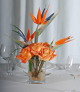 Visually stimulating, soft orange roses are grounded by glistening river rocks while birds of paradise mimic shooting stars in the sky.
