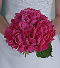 Simplicity and beauty come together at once in this assertive and striking bouquet composed entirely of pink hydrangea.
