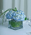 With a touch of garden chic, clouds of gorgeous blue hydrangea burst from a clear cube vase.